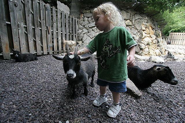 Kind mit Ziegen im Streichelzoo