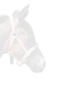 Einladungsvorlage Pferdegeburtstag