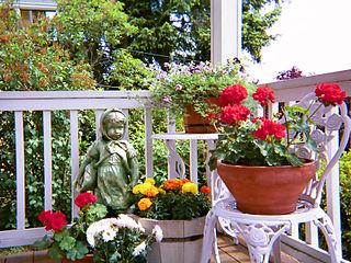 Kübel mit Blühpflanzen